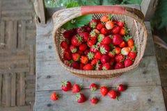 świeże truskawki Zdjęcie Stock