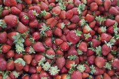 Świeże truskawki na wioska rynku Dojrzały soczysty truskawki zbliżenie Wielki tło dla etykietka dżemu, jagodowy dżem, truskawka j obraz royalty free