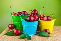 Świeże wiśnie w wiadrach Fotografia Royalty Free