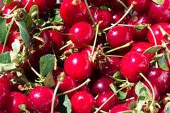 Świeże wiśnie z trzonami i liśćmi Obrazy Royalty Free