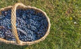 świeże winogrona Obrazy Stock