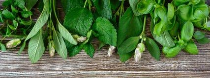 Świeże zielenie i ziele zbierający od ogródu, Ziele dla robić ziołowej herbaty fotografia stock