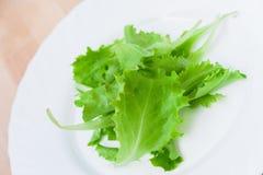świeże zieloną sałatkę Fotografia Stock