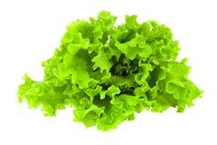 świeże zielona sałata zdjęcia stock