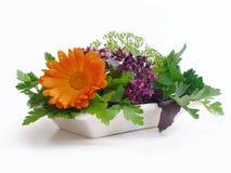 świeże zioła Obraz Royalty Free