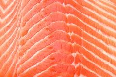 świeżego łososia obraz stock