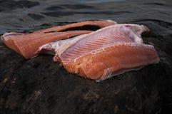 świeżego łososia obrazy royalty free