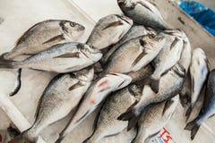 Świeżego Dennej ryba leszcza zdrowy jedzenie Fotografia Stock