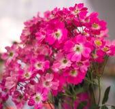Świeżego kwiatu piękny jaskrawy Fotografia Stock