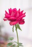Świeżego kwiatu piękny jaskrawy Obrazy Stock