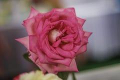 Świeżego kwiatu piękny jaskrawy Obrazy Royalty Free