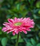 Świeżego kwiatu piękny jaskrawy Zdjęcia Royalty Free