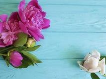 Świeżego peonia bukieta elegancki romans na błękitnym drewnianym tła lecie Fotografia Royalty Free