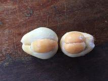 Świeżego salak pondoh cierniowata palmowa owoc Zdjęcia Royalty Free