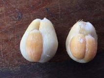 Świeżego salak pondoh cierniowata palmowa owoc Zdjęcia Stock