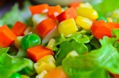 Świeżego warzywa kolorowa sałatka Fotografia Royalty Free