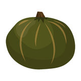 Świeżego zielonego dyniowego warzywa odosobniona wektorowa ilustracja Zdjęcie Stock