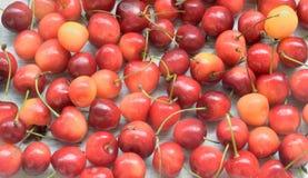 Świeżej jagody - czerwona i żółta wiśnia, tło Obrazy Stock