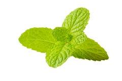 Świeżej mennicy ziele na odosobnionym bielu zdjęcie royalty free
