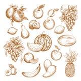 Świeżej owoc nakreślenia set dla zdrowego karmowego projekta Obrazy Royalty Free