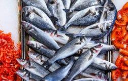 Świeżej ryba dorado odgórnego widoku sibas krewetkowi Obrazy Stock