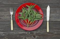 Świeżej wiosny pokrzywowy ziele dla zdrowego jedzenia Obraz Stock