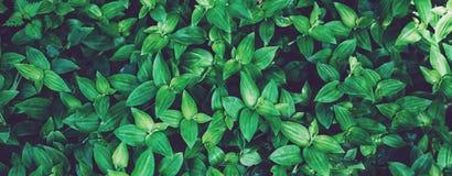 Świeżej zdrowej życiorys tło plamy naturalny odgórny widok, abstrakt zamazywać flory i jaskrawy lato, migoczemy światła słoneczne obraz royalty free