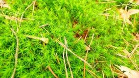 Świeżej zieleni mokry mech na ziemi z liśćmi spadać Suche sosnowe igły, gałązki i suszą liście w zielonym mech Las mlejący przy b zbiory wideo