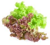 świeżej zieleni odosobniony liść sałaty biel zdjęcie stock