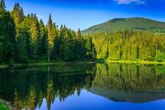 Świeżość blisko lasu Zdjęcie Royalty Free
