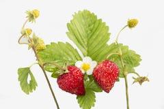 Świeżość. Dojrzałe owoc. fotografia stock