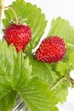 Świeżość. Dojrzałe owoc. zdjęcie stock