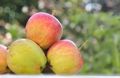 Świeżość jabłka na ogródzie Zdjęcia Royalty Free