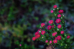Świeżość kwiaty obrazy stock