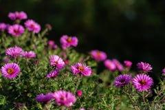 Świeżość kwiaty obraz royalty free