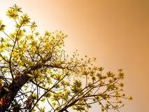 świeżość liście na nieba i światła słonecznego tle obraz royalty free