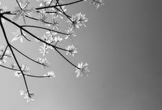 świeżość liście na nieba i światła słonecznego tle obrazy stock