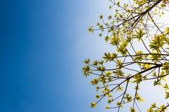 świeżość liście na niebieskiego nieba i światła słonecznego tle zdjęcia royalty free