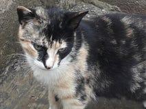 Świeżość młody kot zdjęcia royalty free