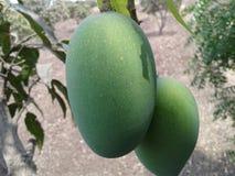 świeżość mangowy zielony kolor Zdjęcie Royalty Free