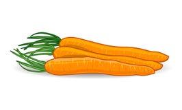 Świeżość marchewki nad białym tłem ilustracji