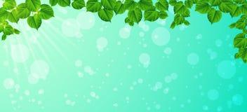 Świeżość wiosna ranek - liście, ilustracja wektor