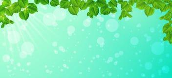 Świeżość wiosna ranek - liście, Naturalny backgrou royalty ilustracja