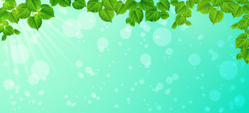 Świeżość wiosna ranek - liście, Naturalny backgrou ilustracji