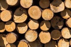 Świeżo ciie drzewne bele Zdjęcia Stock