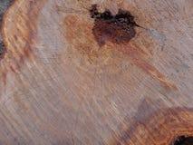 Świeżo ciie drzewnego bagażnika teksturę Obraz Stock