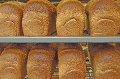 8 świeżo piec całej banatki chlebów od piekarnika w stojaku Fotografia Royalty Free