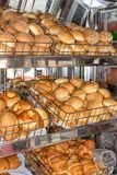 Świeżo piec chleb, półki z babeczkami na pokaz skrzynce ecuador Quito obraz royalty free
