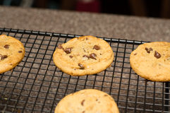 Świeżo piec czekoladowego układu scalonego ciastko Obrazy Stock