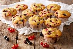 Świeżo piec muffins z czarnego i czerwonego rodzynku jagod zakończeniem Zdjęcia Stock